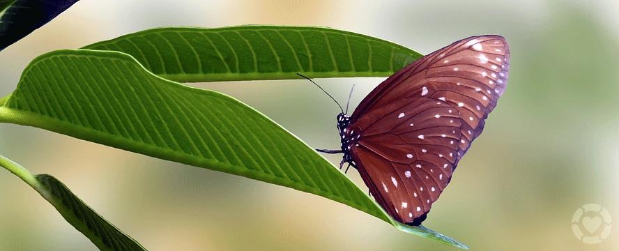 Butterfly Gardening [Infographic] | ecogreenlove