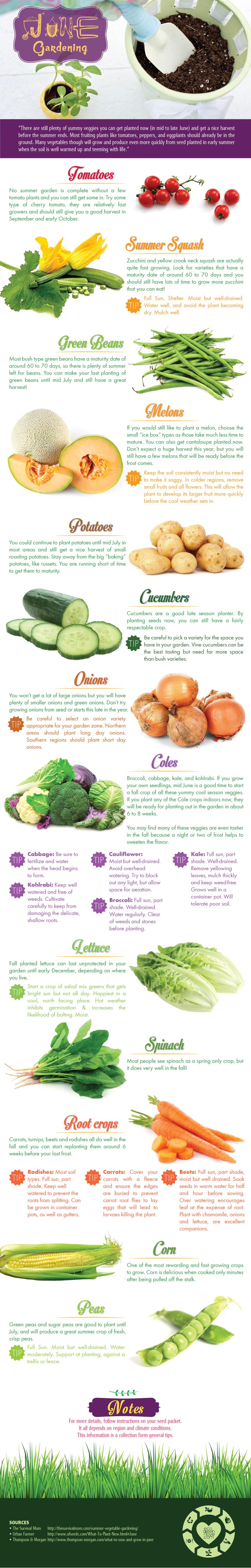 Gardening in June [Infographic]   ecogreenlove