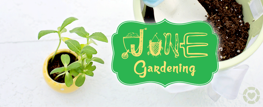 Gardening in June [Infographic] | ecogreenlove