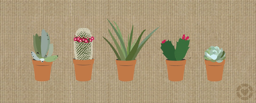 How to plant Succulents [Infographic] | ecogreenlove