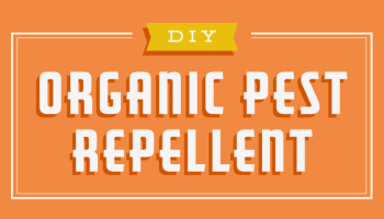 DIY Organic Repellant [Infographic] | ecogreenlove