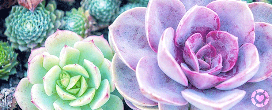 A Compendium of Stunning Desert Plants and Succulents | ecogreenlove