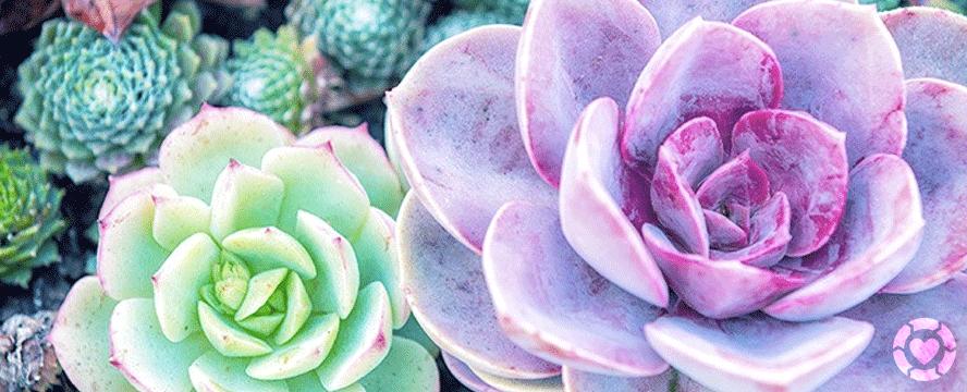 A Compendium of Stunning Desert Plants and Succulents   ecogreenlove