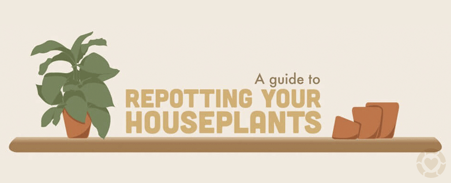 How to Repot your Houseplants [Infographic] | ecogreenlove