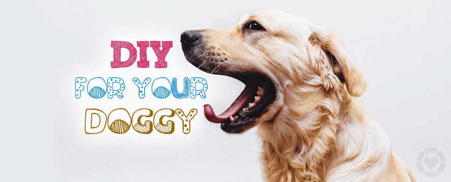 DIY for your Doggy [Infographic] | ecogreenlove
