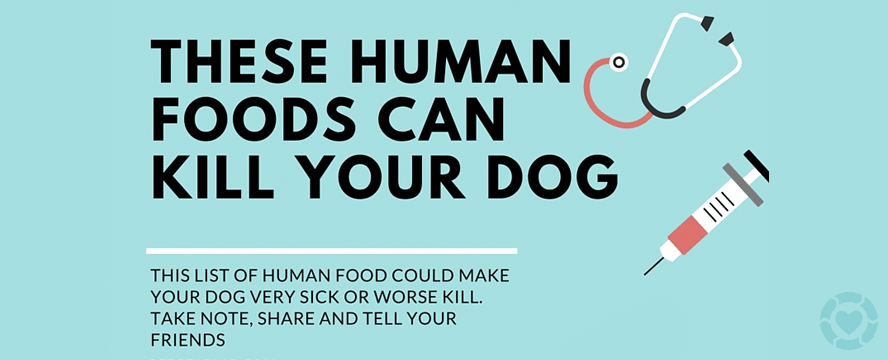 Foods you should NOT give your Dog [Infographic] | ecogreenlove