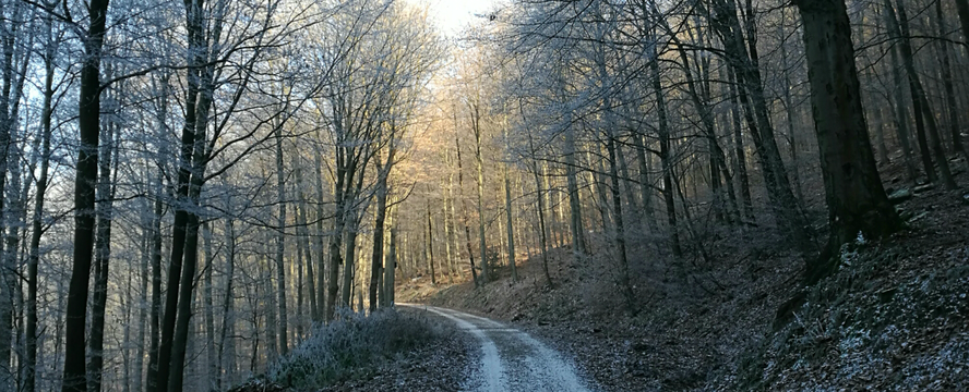 First hike of the year • Winter in Heidelberg | ecogreenlove