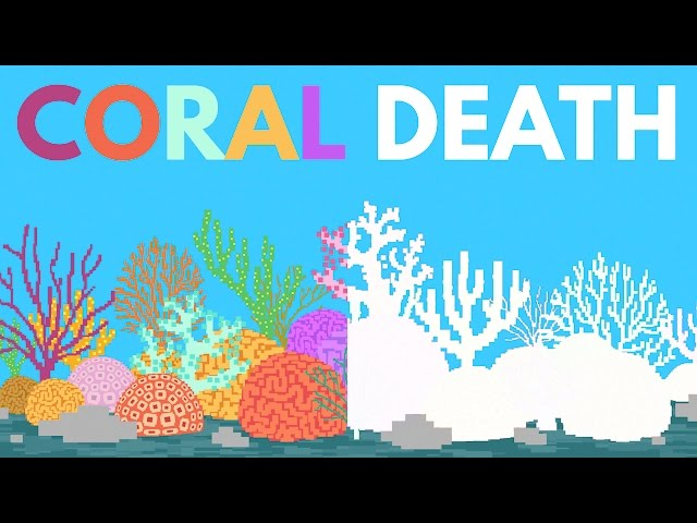 Coral Bleaching explained [Video] | ecogreenlove
