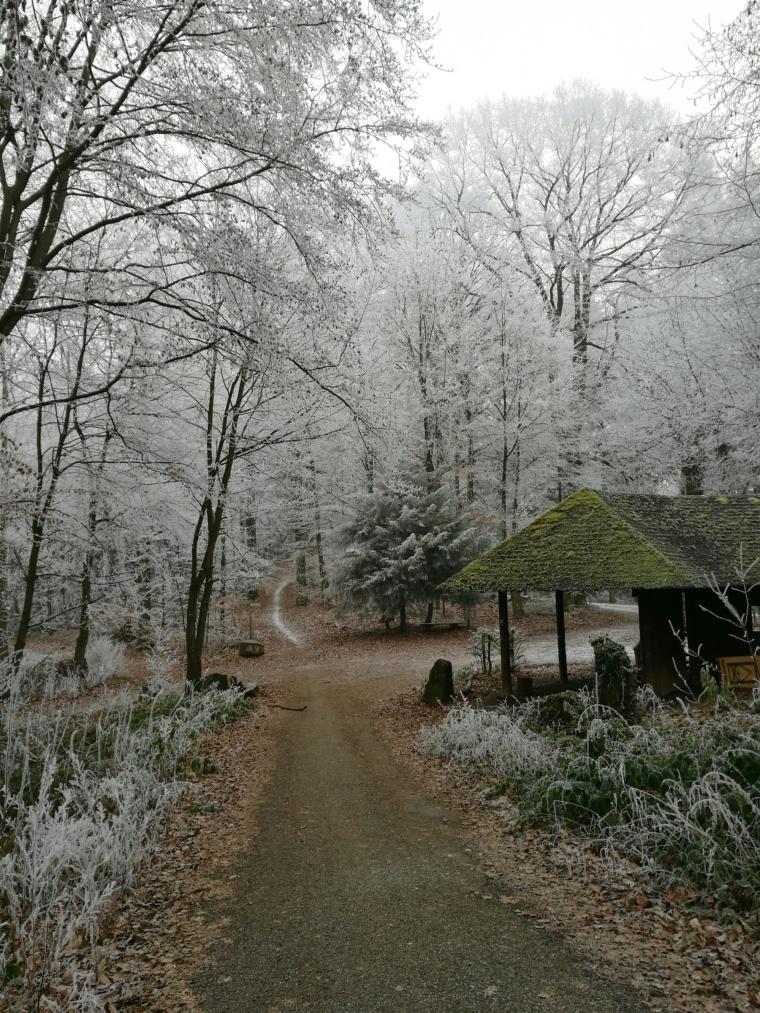 Winter in Heidelberg | ecogreenlove