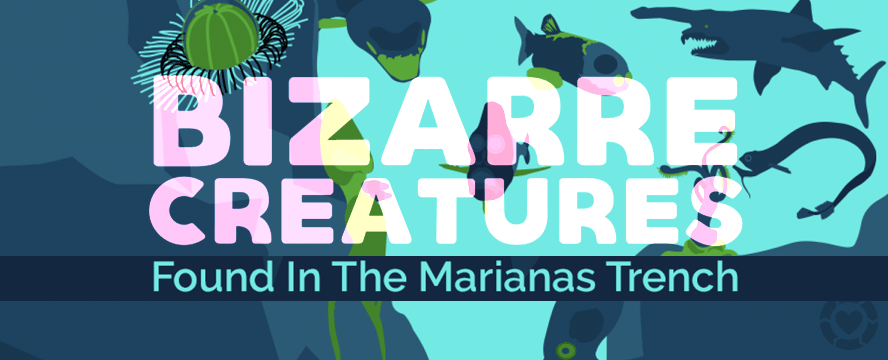 Bizarre Creatures in The Marianas Trench [Infographic] | ecogreenlove