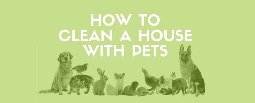 How to clean a House with Pets [Infographic] | ecogreenlove