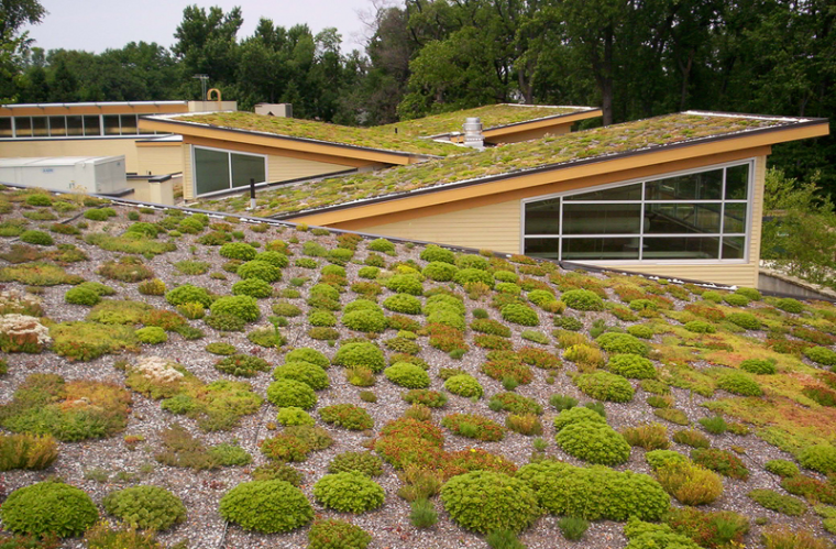 Green Roofs: The Urban Gardens of the Future | ecogreenlove