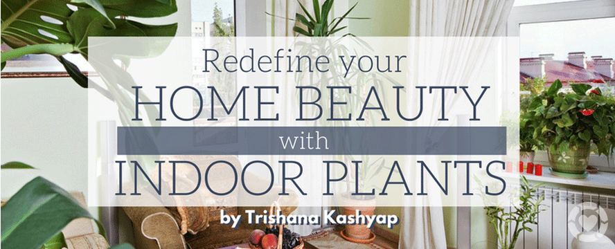 How to Redefine your Home Beauty with Indoor Plants? [Infographic] | ecogreenlove