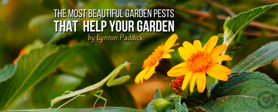 The Most Beautiful Garden Pests That Actually Help Your Garden Grow Better | ecogreenlove