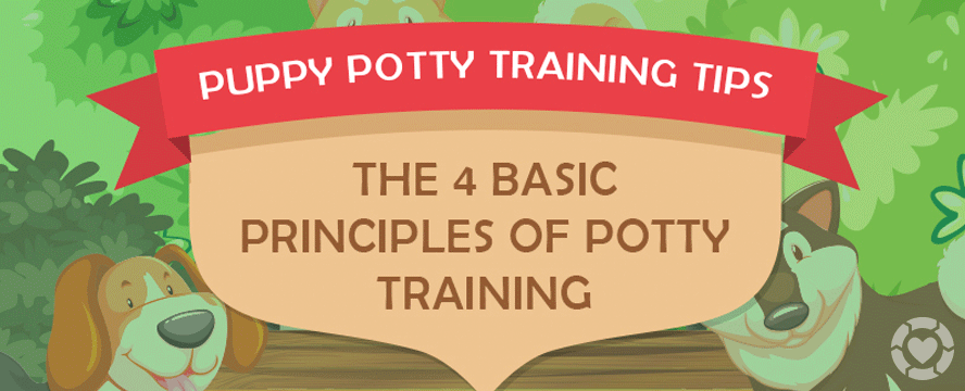 How to Potty Train Your Puppy Using a Bell