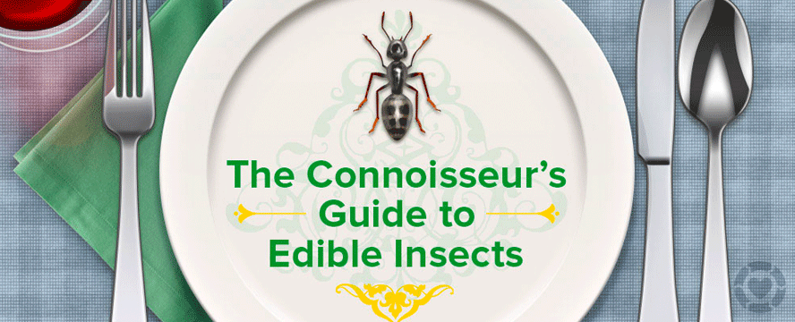 The benefits of Eating Insects [Infographic]   ecogreenlove