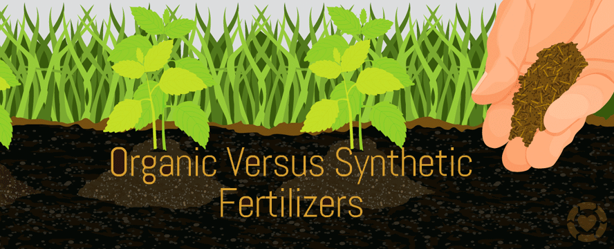 Make your own Homemade Organic Fertilizer [Infographic] | ecogreenlove