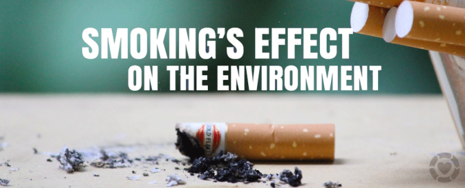 Smoking's Effect on the Environment [Infographic]   ecogreenlove