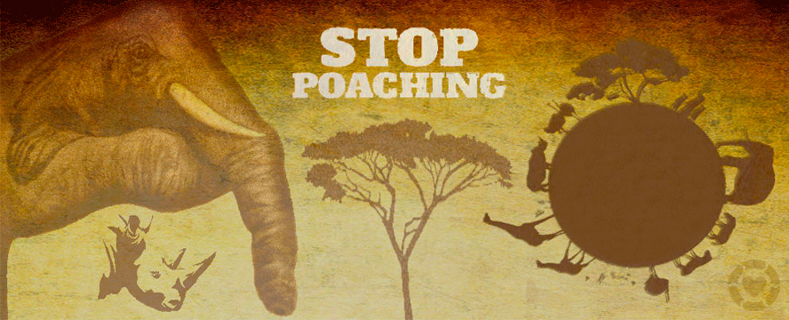 Stop Poaching [Infographic] | ecogreenlove