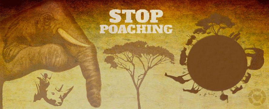 Stop Poaching [Infographic] | ecogreenlove