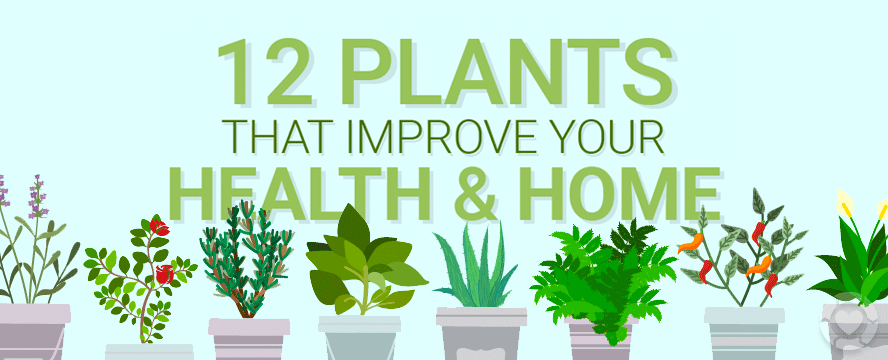 Plants that improve your Health and Home [Infographic] | ecogreenlove