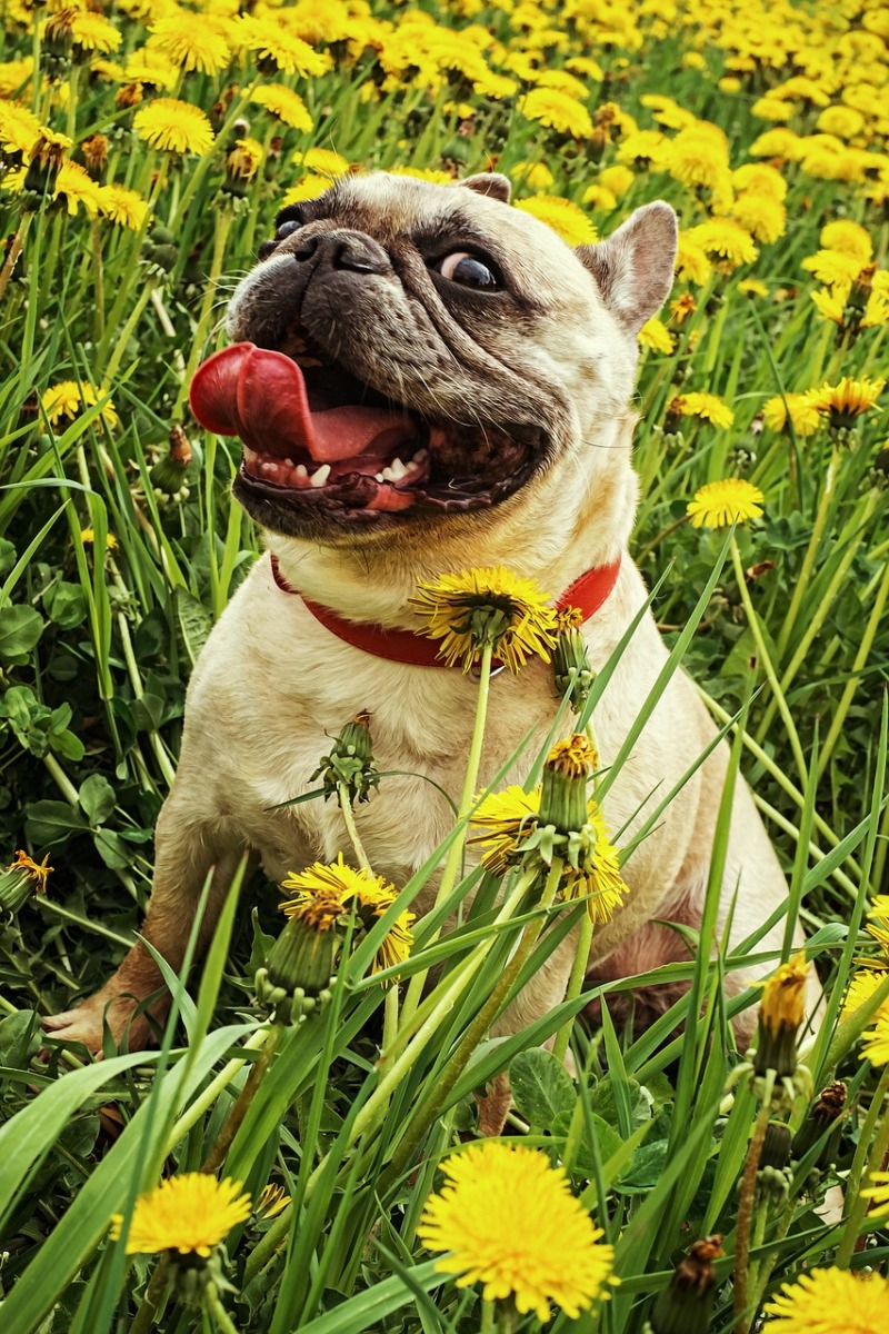 5 Beneficial and 5 Toxic Plants your Dog can meet outdoors | ecogreenlove