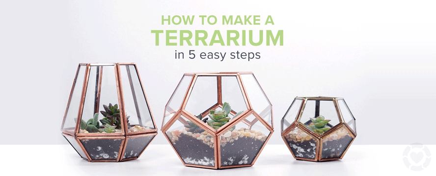 How to Make a Terrarium in 5 Easy Steps [Video+Infographic]
