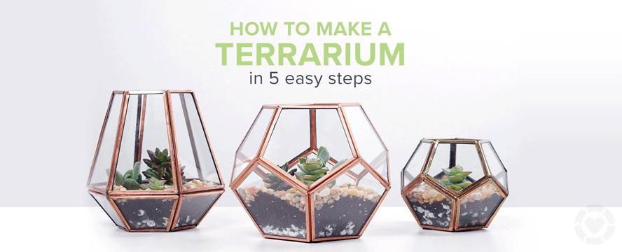 DIY: Terrarium [Infographic] | ecogreenlove