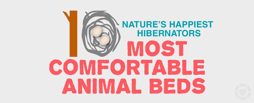 10 of Nature's Happiest Hibernators [Infographic] | ecogreenlove