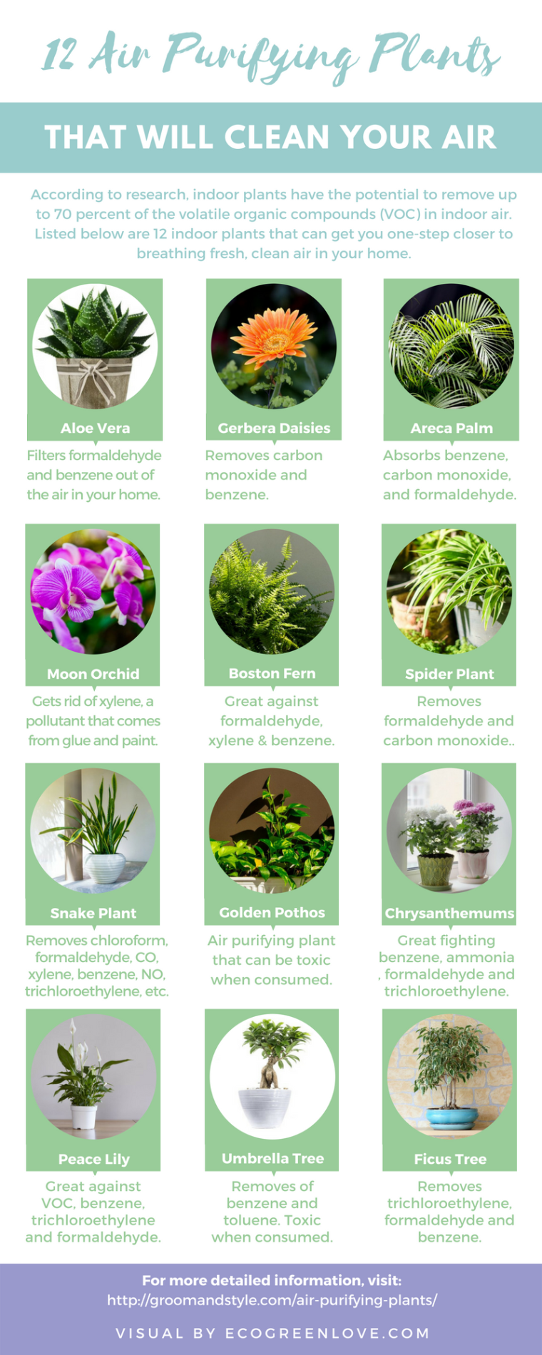 12 Air Purifying Houseplants [Infographic] | ecogreenlove