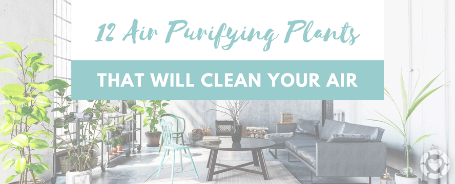 12 Air Purifying Houseplants [Infographic]