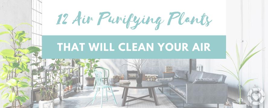 12 Air Purifying Houseplants [Infographic] | ecogreenlove