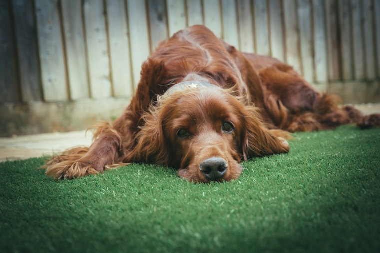 Clean up your Dog Naturally and Eco-Friendly | ecogreenlove