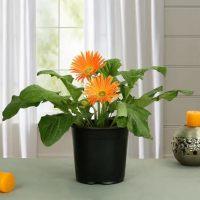 4 Outdoor Plants to Décor your Garden | ecogreenlove