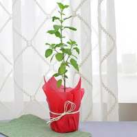 4 Outdoor Plants to Décor your Garden | ecogreenlove