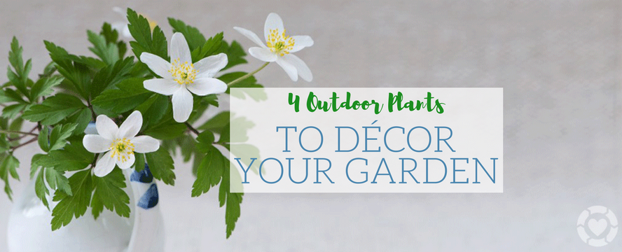 4 Outdoor Plants to Décor your Garden [Infographic] | ecogreenlove