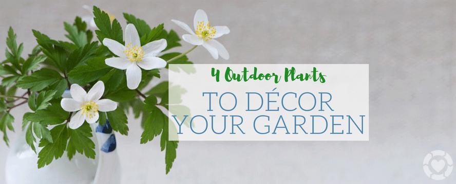 4 Outdoor Plants to Décor your Garden [Infographic] | ecogreenlove