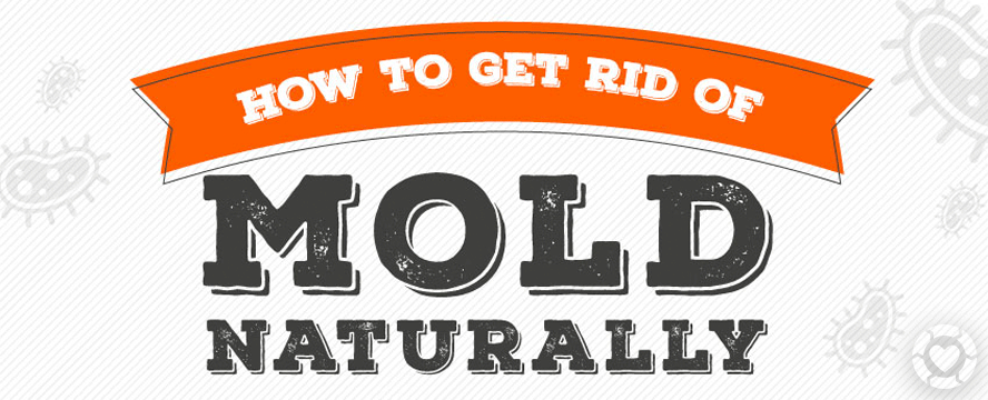 How to Remove Mold naturally [Infographic] | ecogreenlove