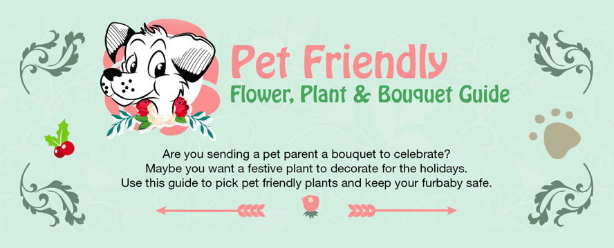 Pet Safe Flowers & Which to Avoid Buying [Printable Infographic]   ecogreenlove