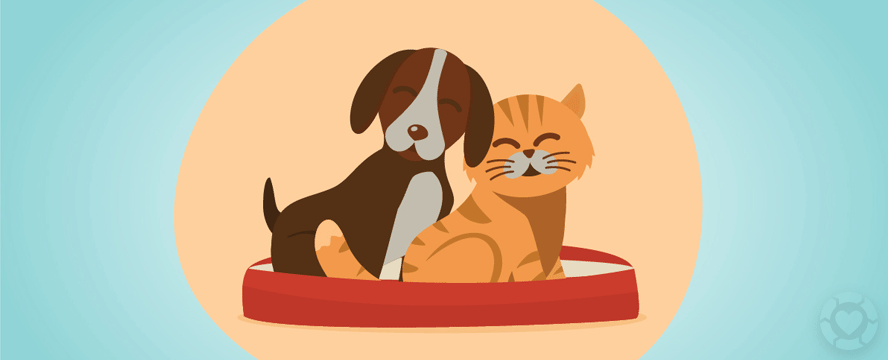 Happy Pets: How to Protect your Pets from Parasites | ecogreenlove