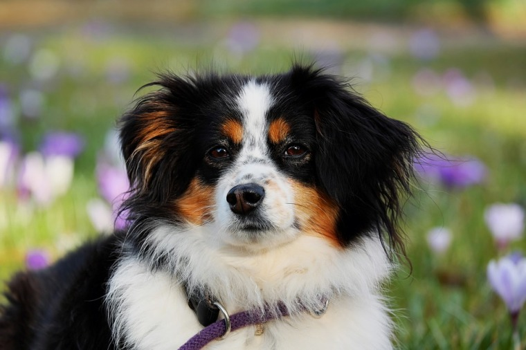 Happy Pets: How to Protect your Pets from Parasites   ecogreenlove
