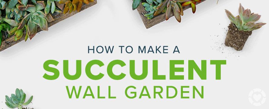 DIY Succulent Garden Wall [Video+Infographic] | ecogreenlove