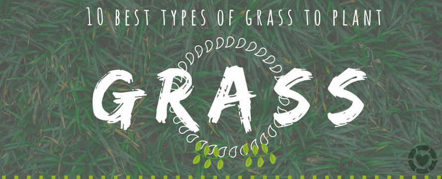 10 popular types of grasses to plant in all seasons [Infographic] | ecogreenlove