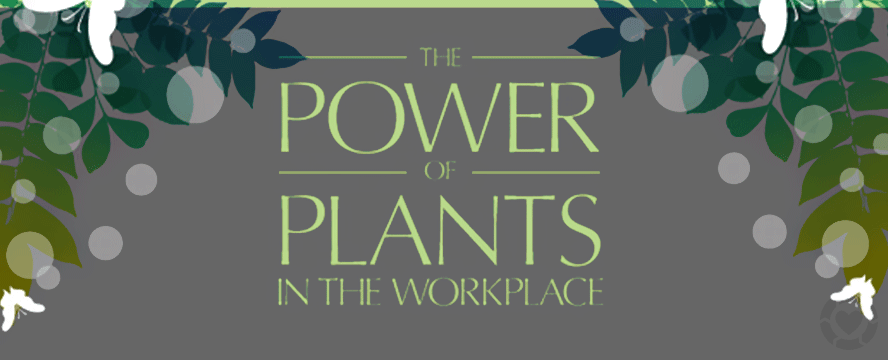 The power of plants in the workplace [Infographic] | ecogreenlove