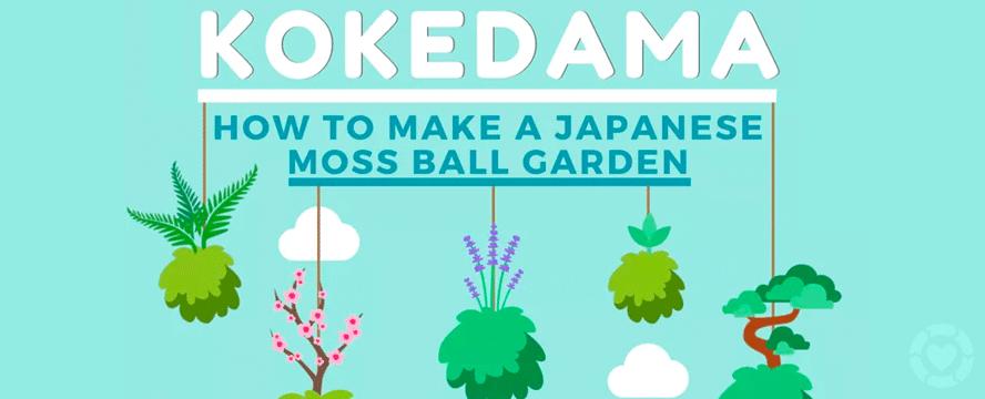 DIY Kokedama: Japanese Moss Ball Garden [Infographic] | ecogreenlove
