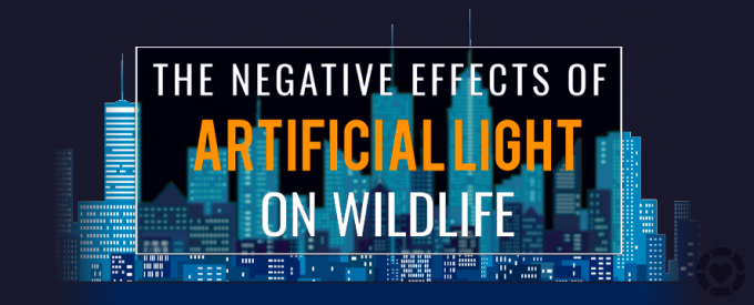 Why Artificial Lighting is Bad for the Environment [Infographic] | ecogreenlove