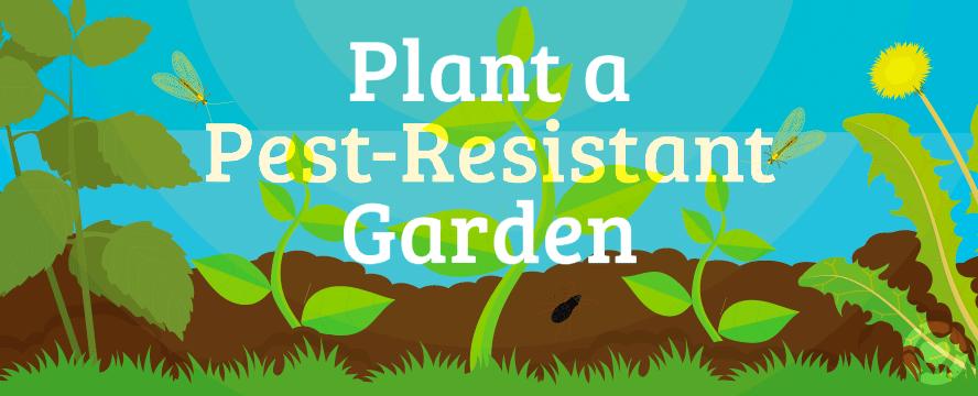 Plant a Pest-Resistant Garden [Infographic]