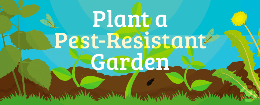 Plant a Pest-Resistant Garden [Infographic] | ecogreenlove