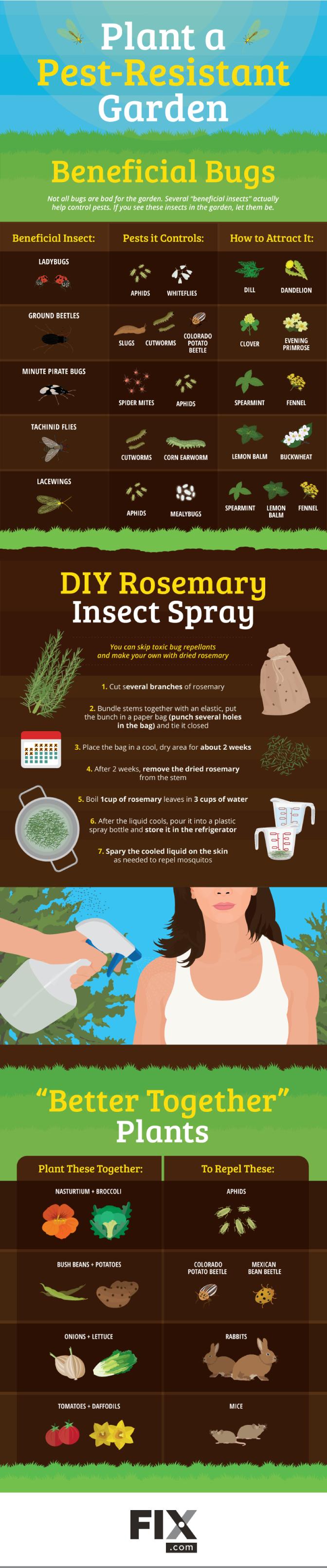 Plant a Pest-Resistant Garden [Infographic] | ecogreenlove