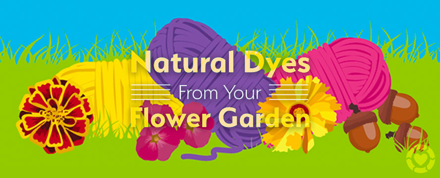 Natural Dyes from your Flower Garden [Infographic] | ecogreenlove